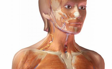 3D anatomy of a Virtual Human Body